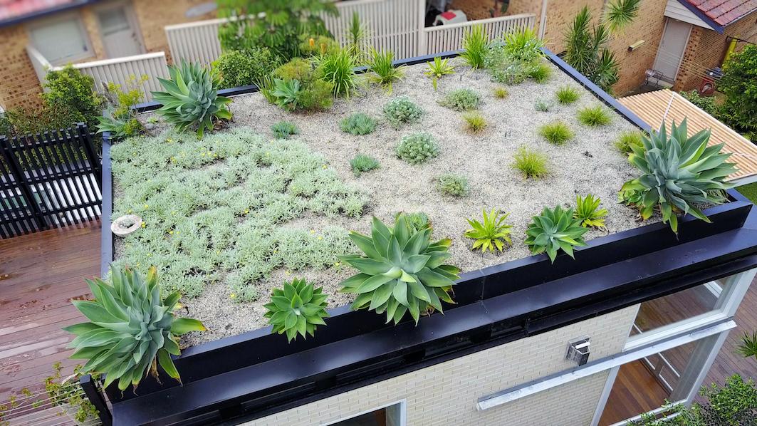 d+k_green roof
